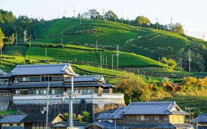 Matcha Tea Fields - Wazuka, Japan ©Tiffany Cromwell